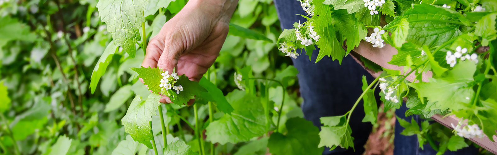Wild Food: 3 Amazing Foraged Food Recipies To Try This Summer
