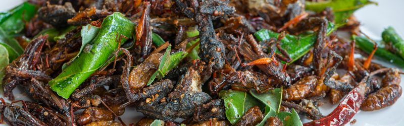 Insects As The Food Of The Future